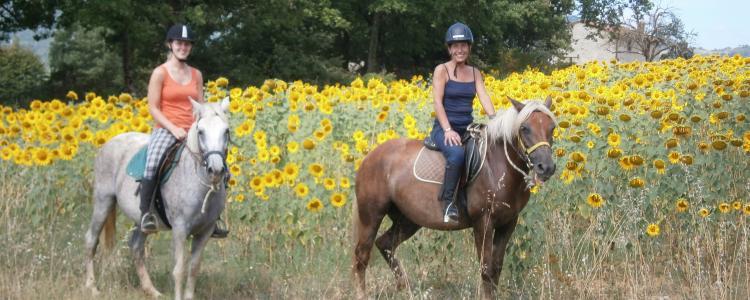girasole horses cavalli